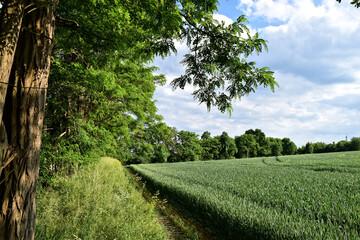 Wanderweg zwischen Feld und Wald