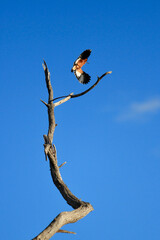 Landing Bird on Stick