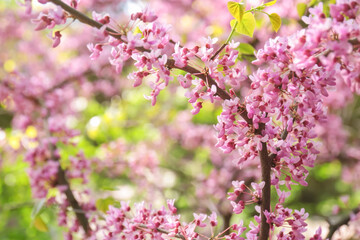 Branch with blooming flowers on blurred background