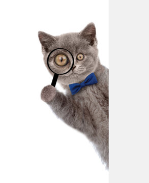 Smart cat with tie bow looks thru a magnifying lens. Isolated on white background