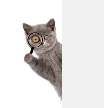 Funny cat looks thru a magnifying lens. Isolated on white background