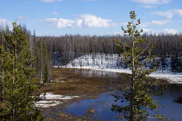 Yellowstone NP - Early Summer
