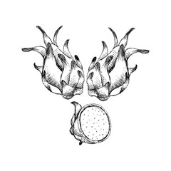 Hand drawn dragon fruit.