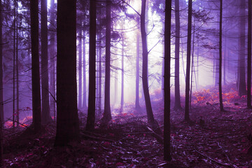 Wall Mural - Spooky pink purple colored foggy light in the forest tree landscape. Color tone filter effect used.