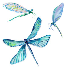 Foto op Canvas Surrealisme Insect dragonfly set in a watercolor style isolated.