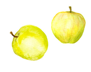 Yellow apples. Watercolor