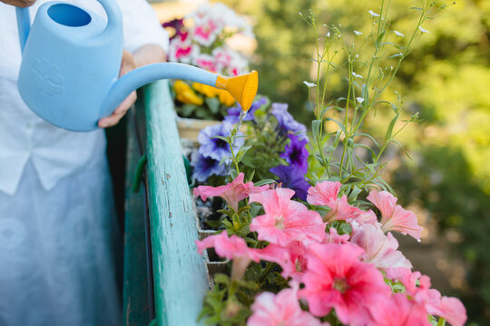 Watering flowers on the balcony