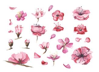 Hand drawn watercolor flowers of sakura set.