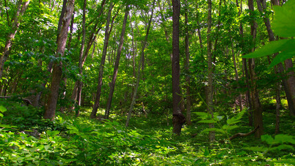 Broad-leaved Forest