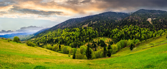 meadow with trees in mountains
