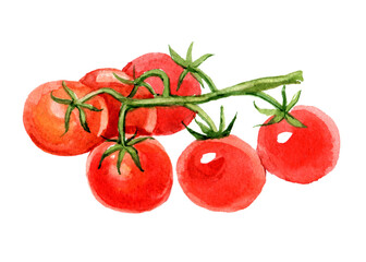 Cherry tomatoes on branch, isolated on white background, watercolor illustration