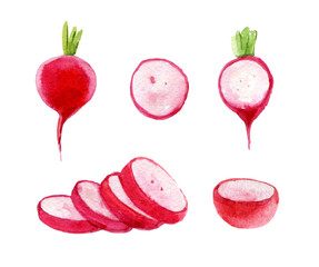 Set of red radish, isolated on white background, watercolor illustration