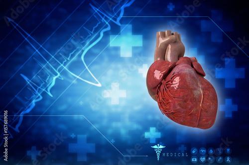 3d Anatomy of Human Heart \