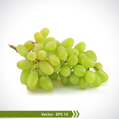 Realistic Illustration of Green Grapes
