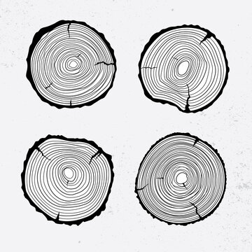Tree trunk cross section, line design, vector illustration