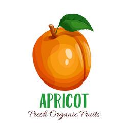 Vector apricot illustration