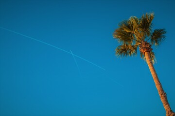Barcelona, Spain - June 3, 2017: Single palm-tree with a clean blue sky - cinema version