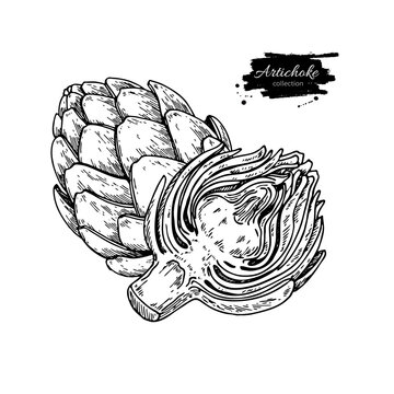 Artichoke hand drawn vector illustration. Isolated Vegetable engraved style object.