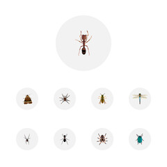 Realistic Bug, Ant, Tarantula And Other Vector Elements. Set Of  Realistic Symbols Also Includes Insect, Bee, Butterfly Objects.