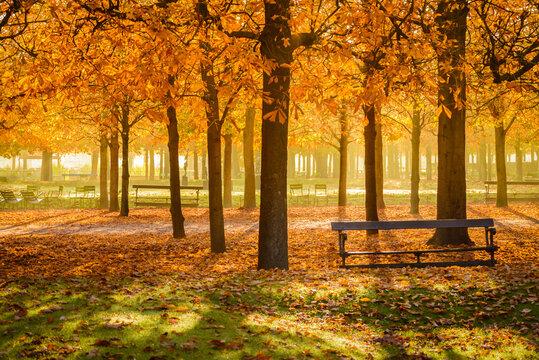 Saison d'automne au jardin des Tuileries à Paris