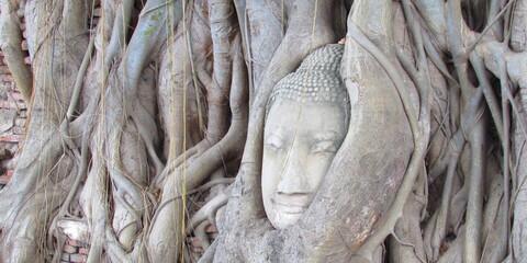 Budda intrappolato tra le radici