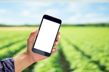 Agronomist man using Smartphone in Agriculture farm. For Graphics Display Montage.