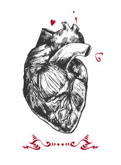 Beautiful realistic heart on a white background. Hand drawn illustration. It can be used for printing on t-shirts and idea for tattoo .