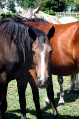 Lots of horses