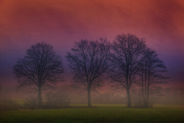 A group of trees with picturesque effect
