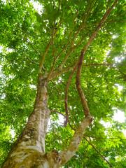 greenery tree