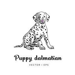 Vector editable colorful image depicting a cute dalmatian puppy dog. Isolated on a white background. Canis lupus familiaris