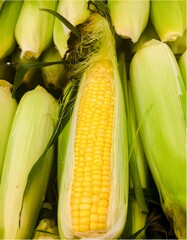 An up close view of ears of Golden Yellow Co