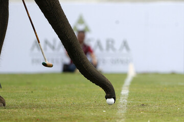An elephant takes part in an exhibition match during the annual charity King's Cup Elephant Polo Tournament at a riverside resort in Bangkok