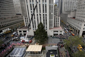 A 78-foot-tall Norway Spruce is hoisted into position as the 2015 Rockefeller Center Christmas Tree in New York