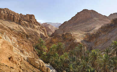 stone desert and palm oasis in Tunisia