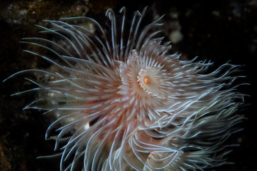 Abstract of Feather Duster Worm Underwater