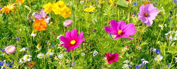 Wall Mural - Sommerblumen - bunte Blumenwiese Hintergrund Banner
