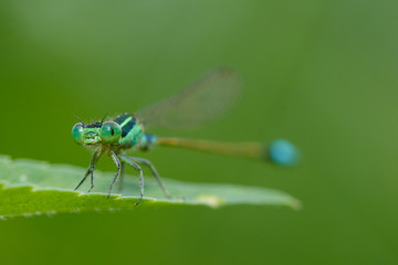 Insects, Dragonfly, Damselfly.
