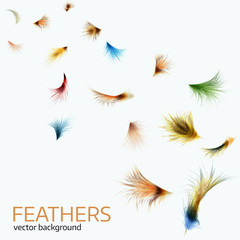 Vector illustration of  colorful  exotic feathers.