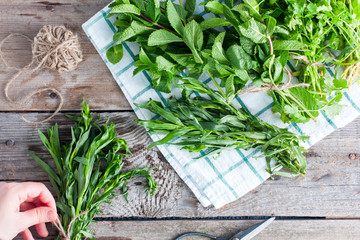 Female hands gather in a bunch of fresh greens tarragon on a wooden table next to other fragrant fresh herbs, top view