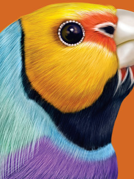Close up of Gouldian finch