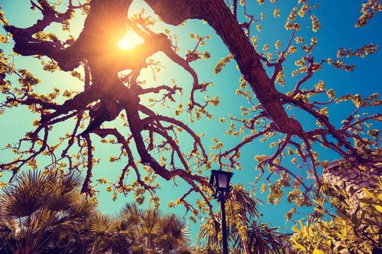 Branch of a fig tree against the blue sky with the sun. Abstract background