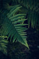 Dark background with branch of fern