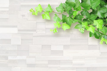 ivy white wooden background