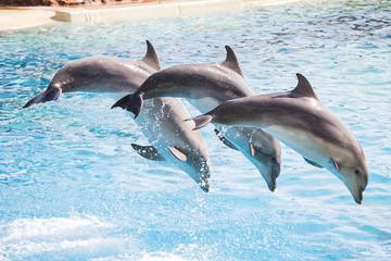 Poster de jardin Dauphin Dolphins diving