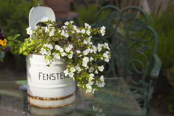 Flowering Bacopa plant in a rustic metal container with German text Fenstereimer means Window bucket