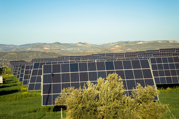 Field Of Solar Panels In A Rural Setting, sustainable energy