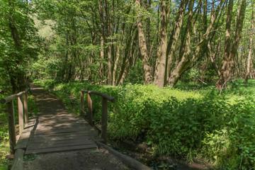 Wandernweg, Feuchtwiesen, Wald, Bohlenweg, Holzbrücke