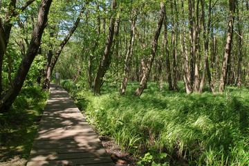 Wandernweg, Feuchtwiesen, Wald, Bohlenweg
