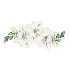 Freesia flower 4 . Watercolor painting. Hand drawing. Template for design of wedding cards, invitations, posters.